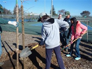 SMS garden club students plant new trees on campus